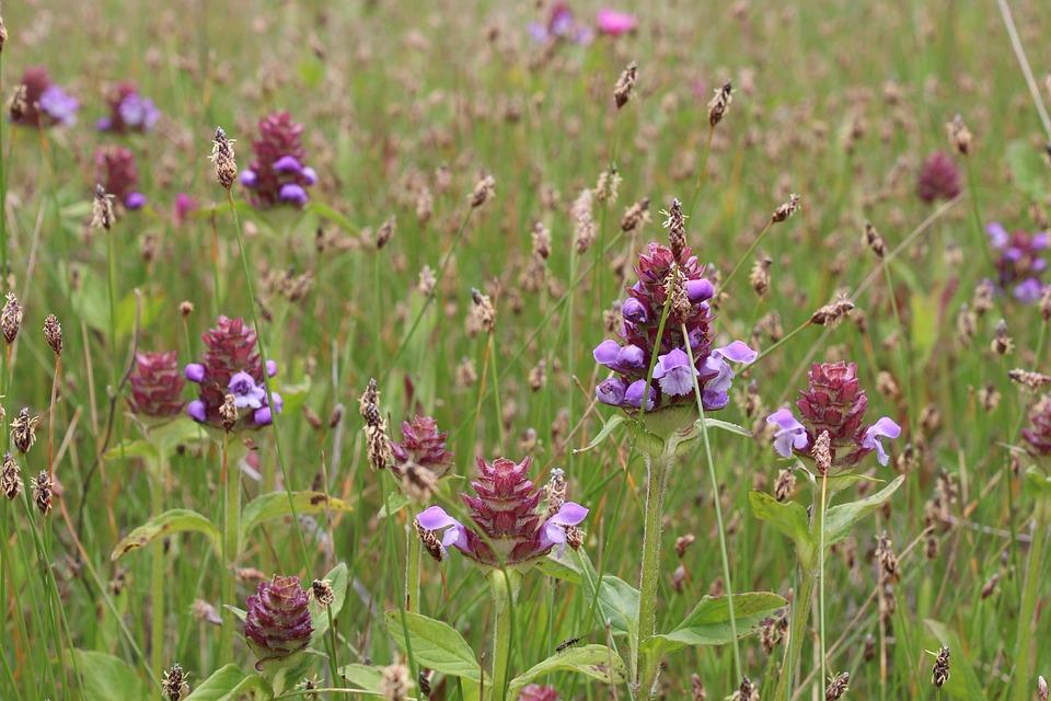 Flower, Flowers, Nature, Garden, Flora, Prado, Spring