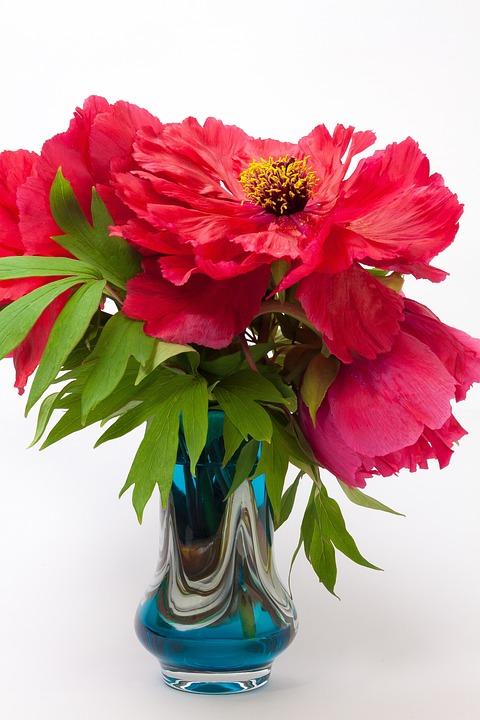Pentecost, Peony, Flower, Nature, Flora, Spring