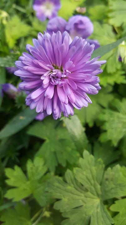 Nature, Flora, Garden, Flower, Summer, Leaf, Outdoors