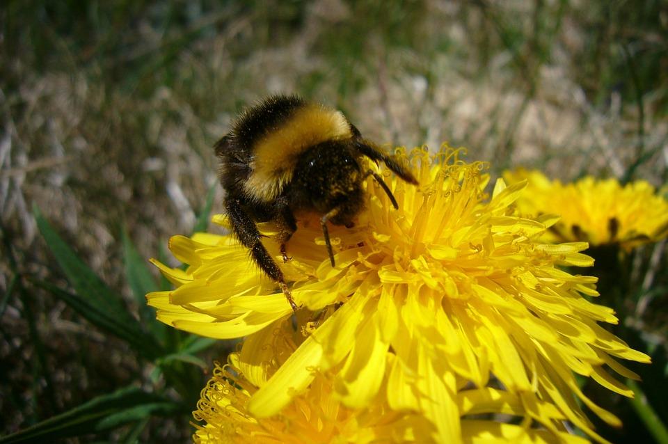 Summer, Sunny, Sun Flower, Public Record, Flora