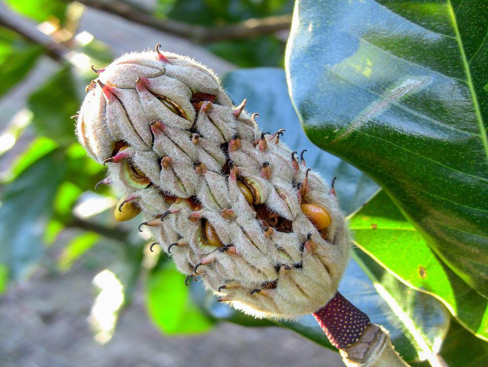 Nature, Tree, Flora, Fruit, Leaf