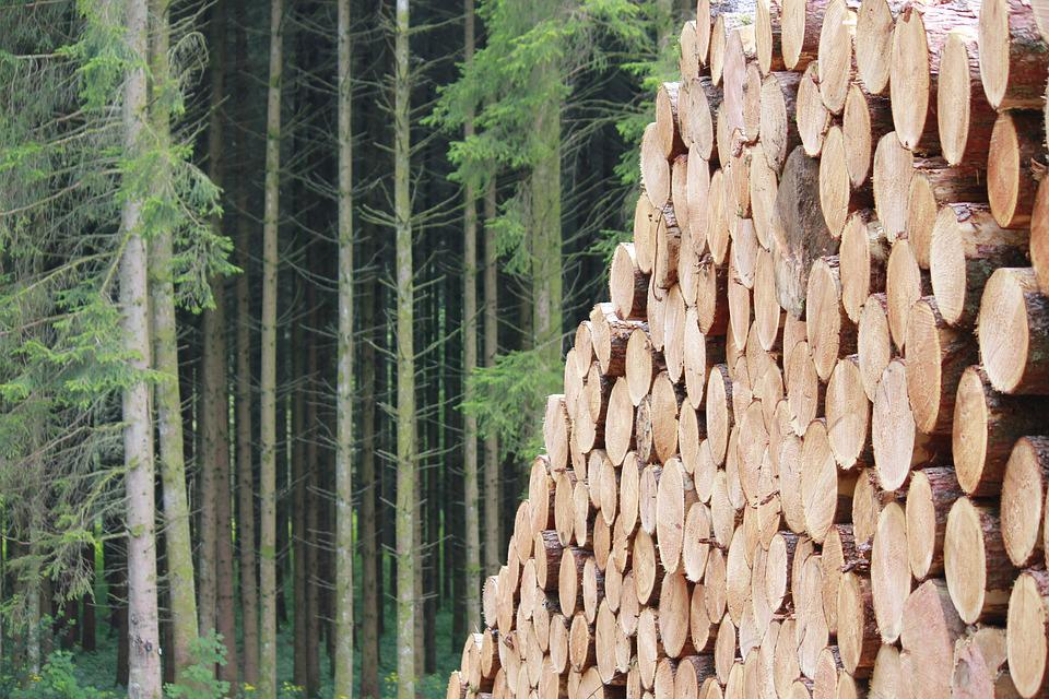 Nature, Wood, Tree, Flora, Pine, Forest, Wood Pile
