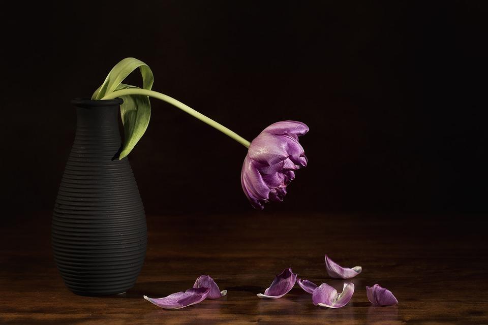 Nature Dead, Flower, Tulip, Still Life, Nature, Flora