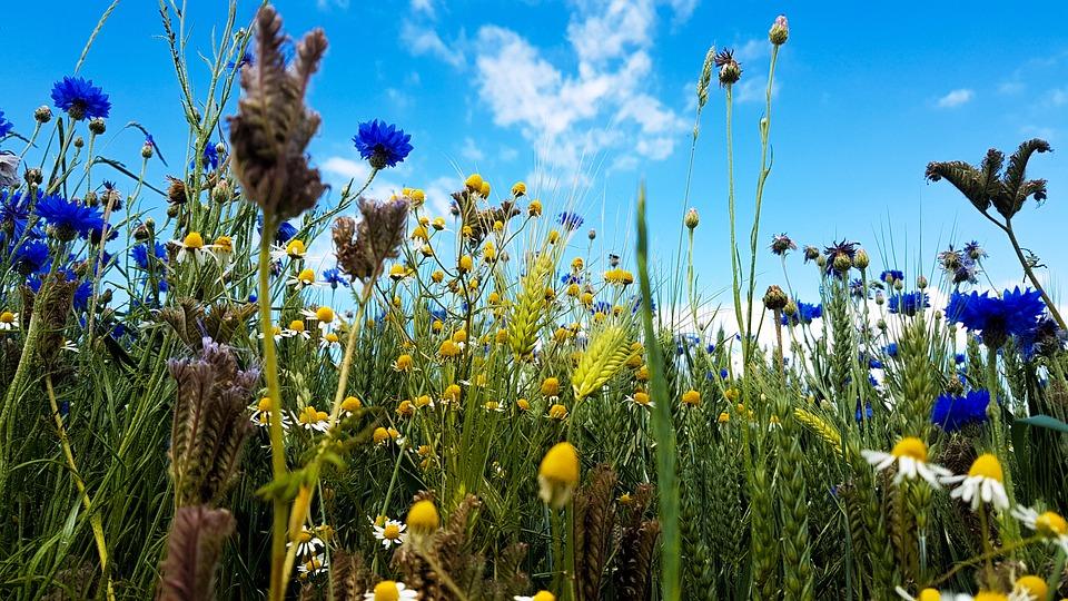 Wild Flowers, Field, Nature, Flora, Summer, Meadow
