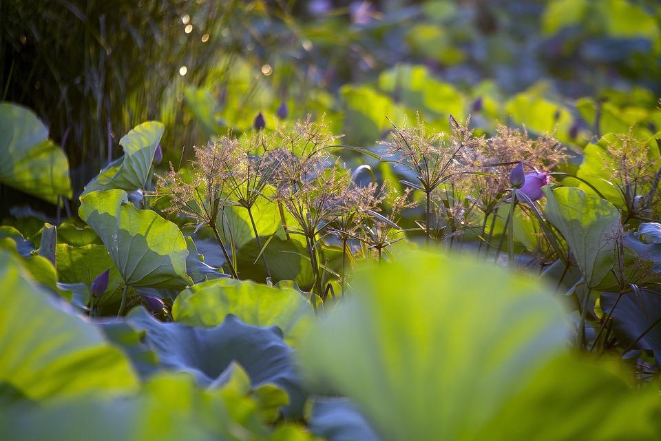 Reed Flower, Plant, Wildflower, Beetle, Flora, Botany