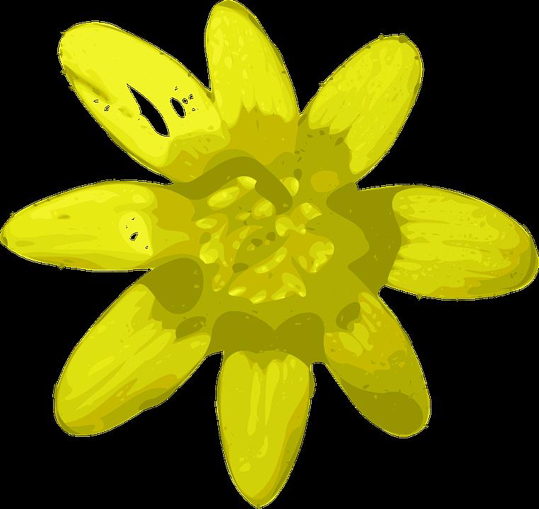 Flower, Yellow, Bright, Beautiful, Flora