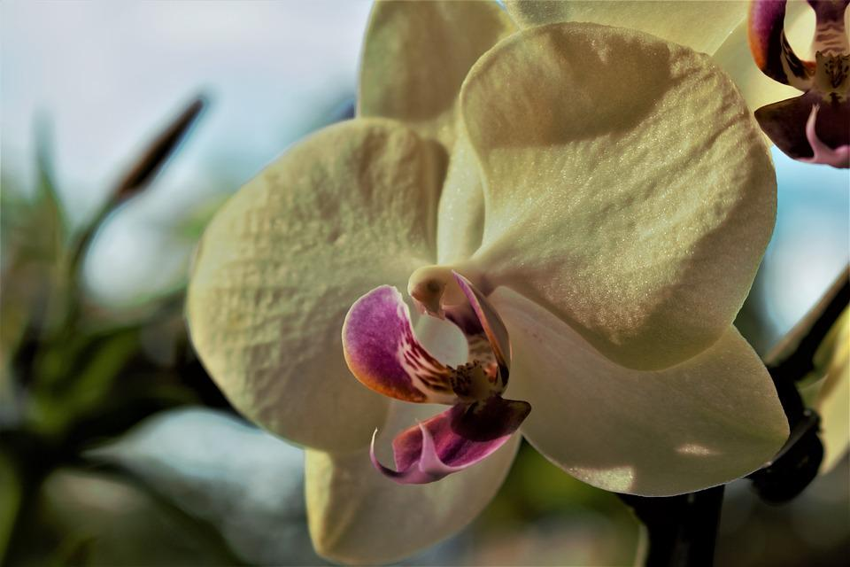 Orchid, Flower, Blossom, Flora, Nature, Yellow, Petals