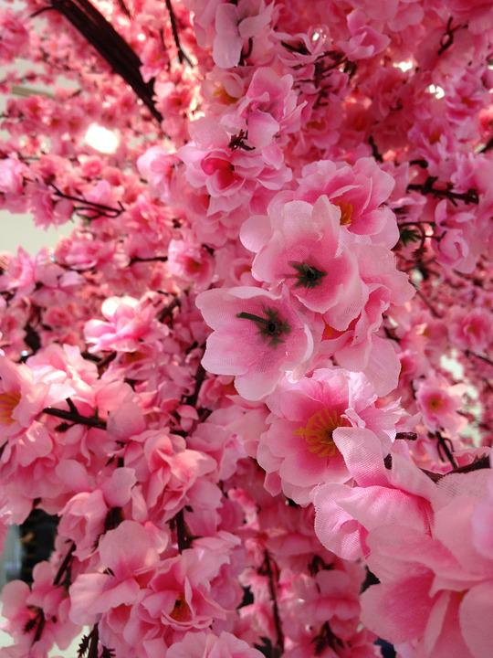 Free photo floral blossom flowers fake pink sakura max pixel sakura fake flowers pink blossom floral mightylinksfo