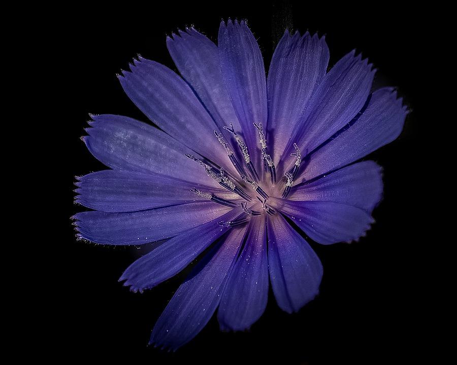 Flower, Blue, Lilac, Violet, Floral, Nature, Garden