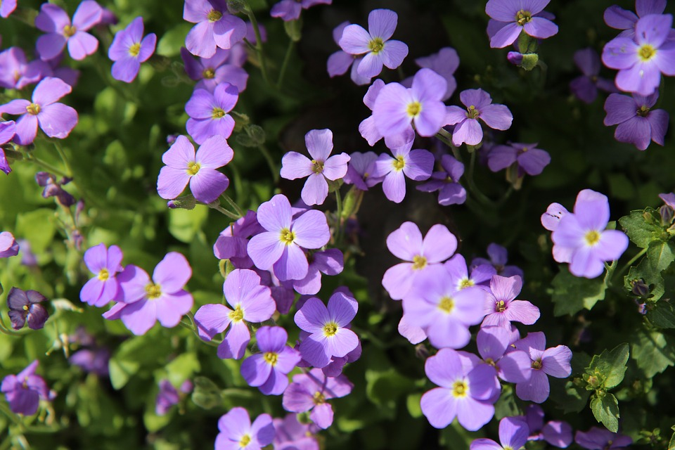Free photo floral border purple flowers flowering perennial max pixel floral border purple flowers flowering perennial mightylinksfo