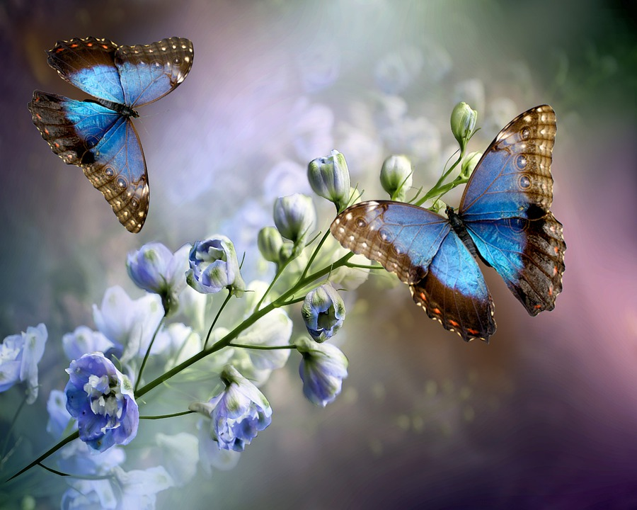 Flowering, Butterflies, Insects, Nature, Floral
