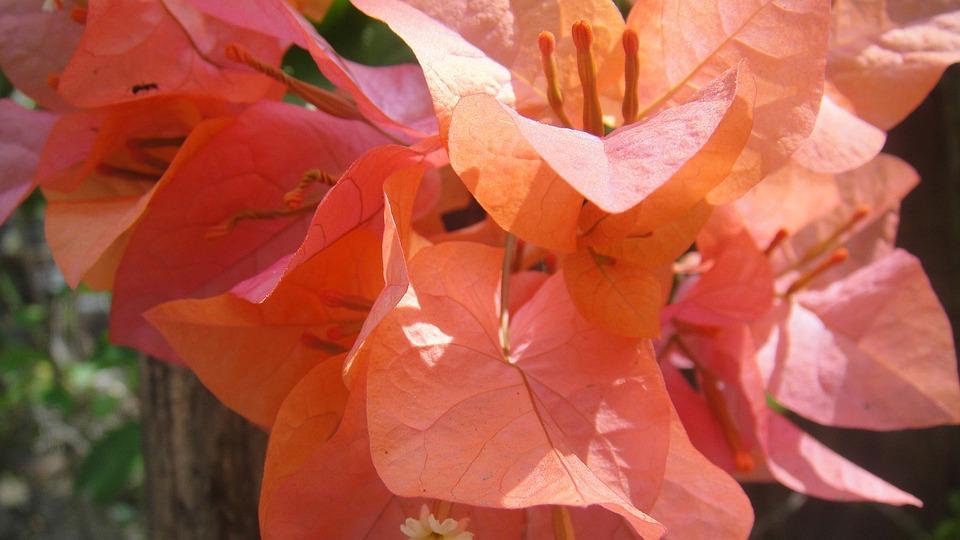 Cadena De Amor, Flower, Orange, Vibrant, Floral