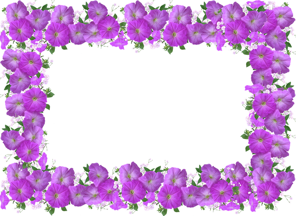 . Free photo Floral Decoration Frame Petunia Border   Max Pixel