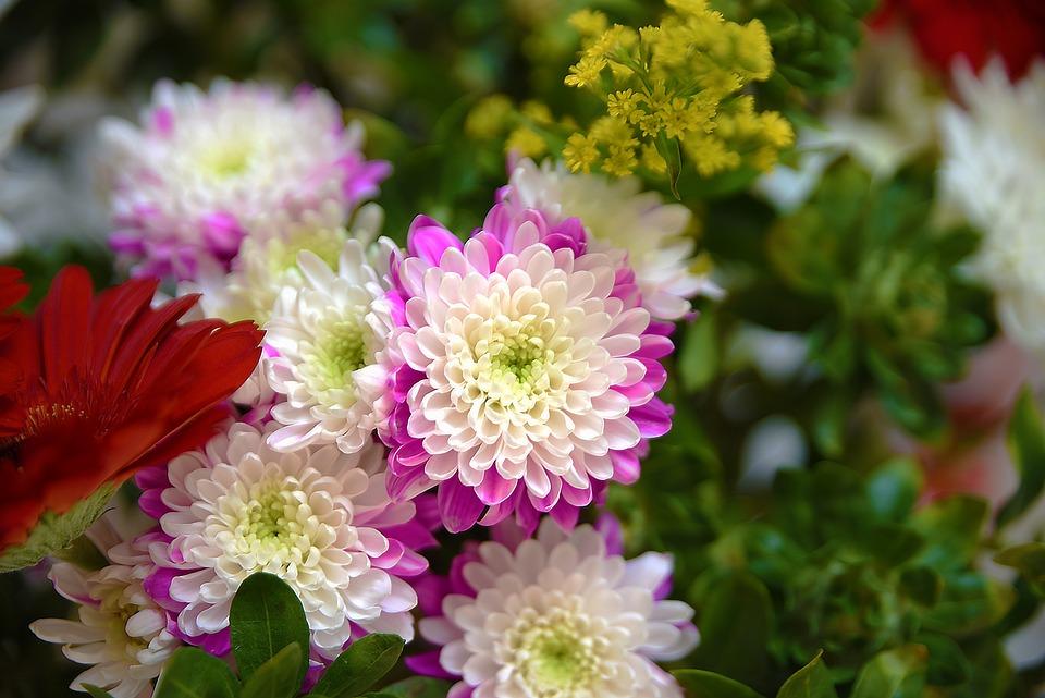Flower, Flora, Nature, Floral, Petal, Blooming, Garden