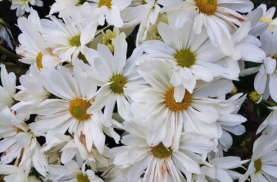 Flower, Floral, Nature, Blossom, Summer, Bloom, Garden