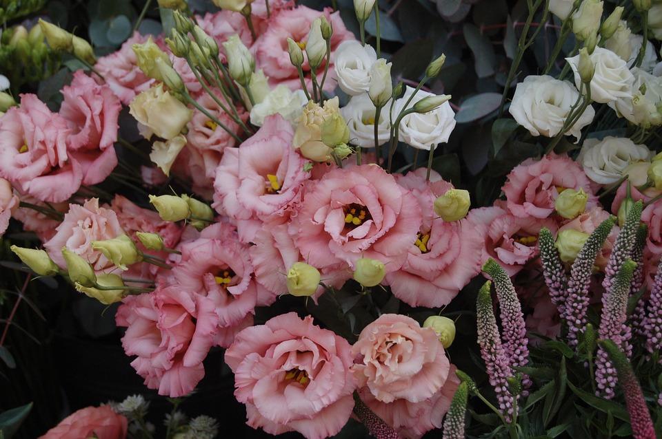 Flower, Plant, Nature, Floral, Petal, Romantic, Bouquet