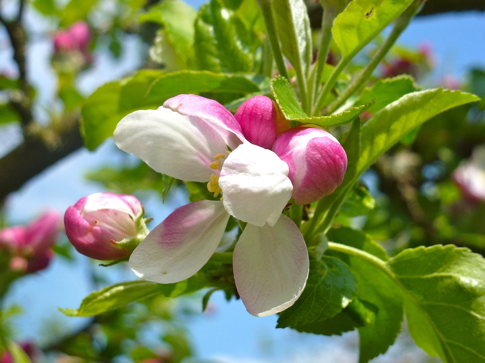 Flowers, Pink, Spring, Nature, Spring Flowers, Floral