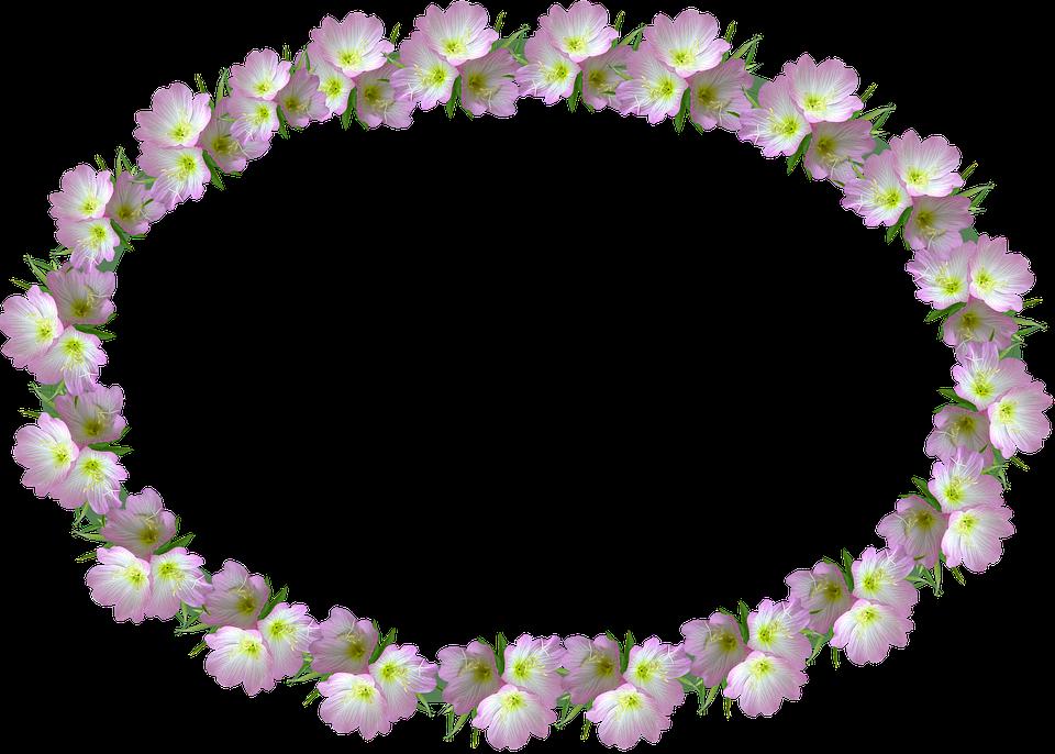 Frame, Floral, Pink Flowers