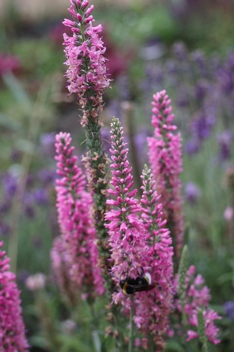 Summer, Garden, Plants, Floral, Violet