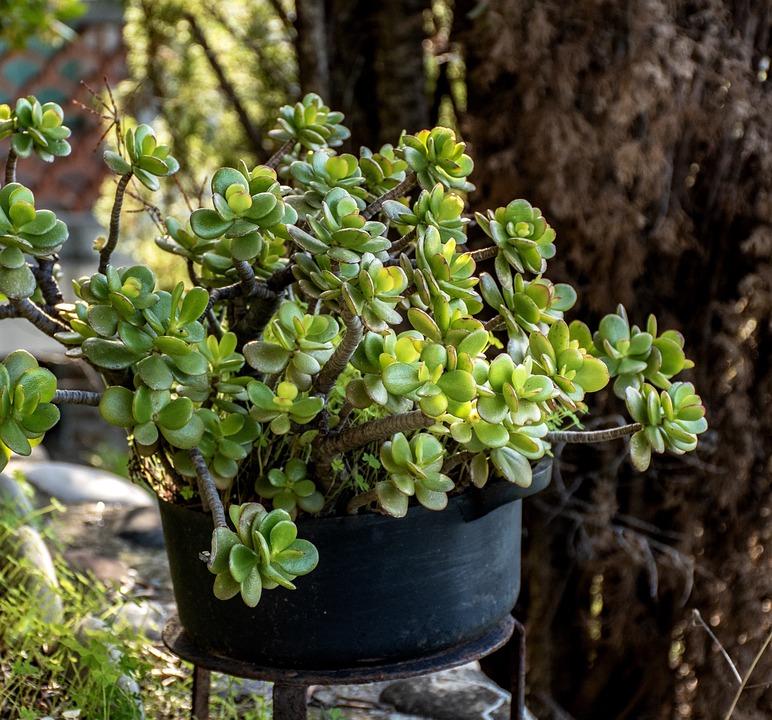 Potted Plant, Vegetation, Garden, Green, Floral, Nature