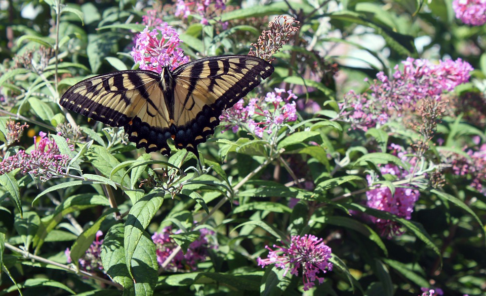 Swallowtail, Flower, Butterfly, Insect, Floral, Plant