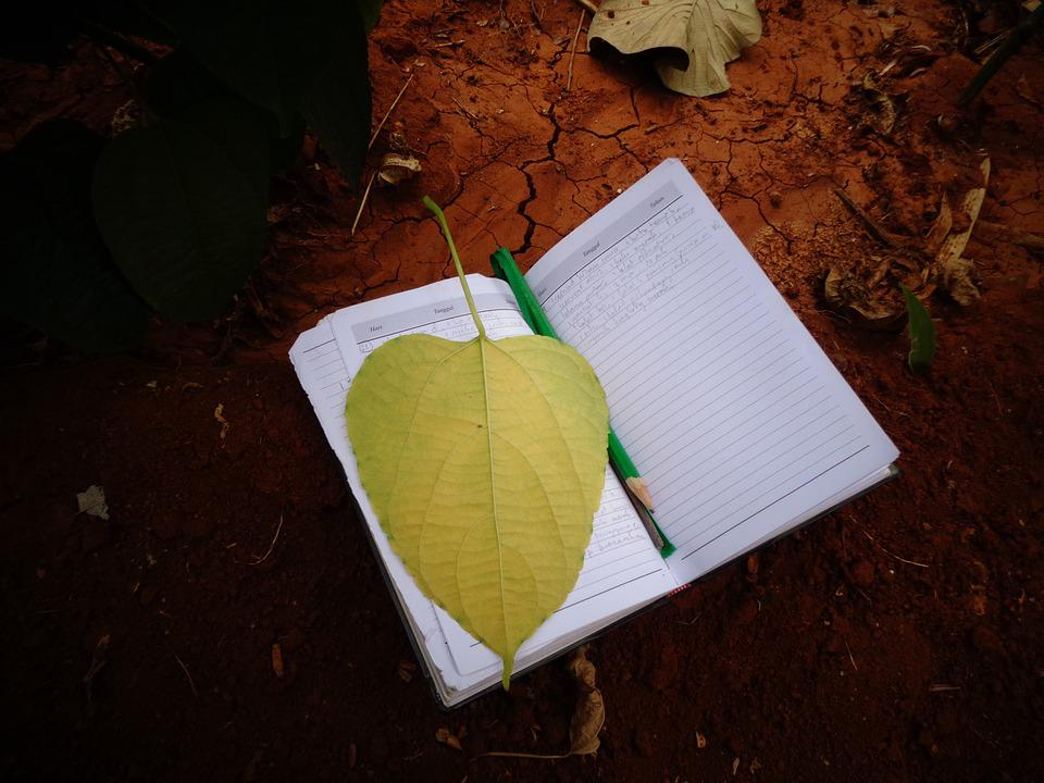 Paper, Leaf, Book, Nature, Floral