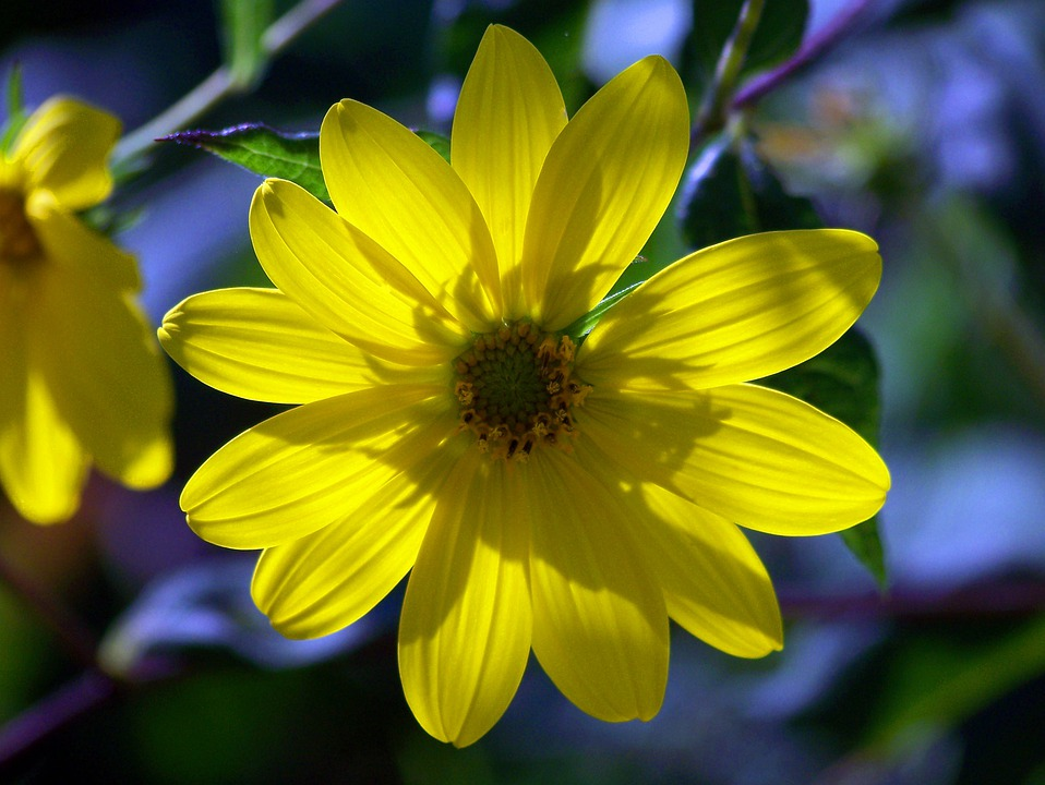 Flower, Petals, Sun, Summer, Yellow, Nature, Floral