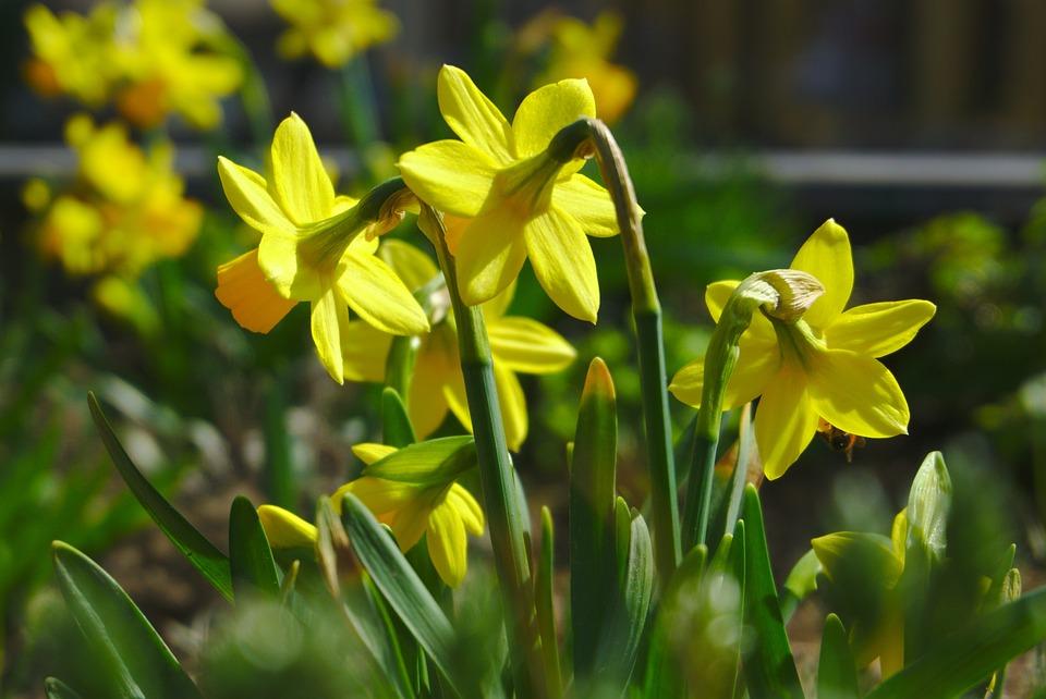 Flower, Nature, Plant, Garden, Floral, Flowers, Spring