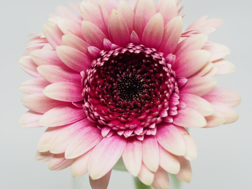 Flower Petal Nature Floral Flora Beautiful Love