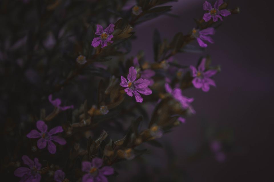Flowers, Petals, Buds, Leaves, Bush, Flora, Floral