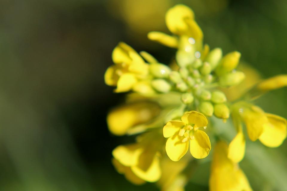 Flower, Close-up, Floral, Plant, Natural, Blossom