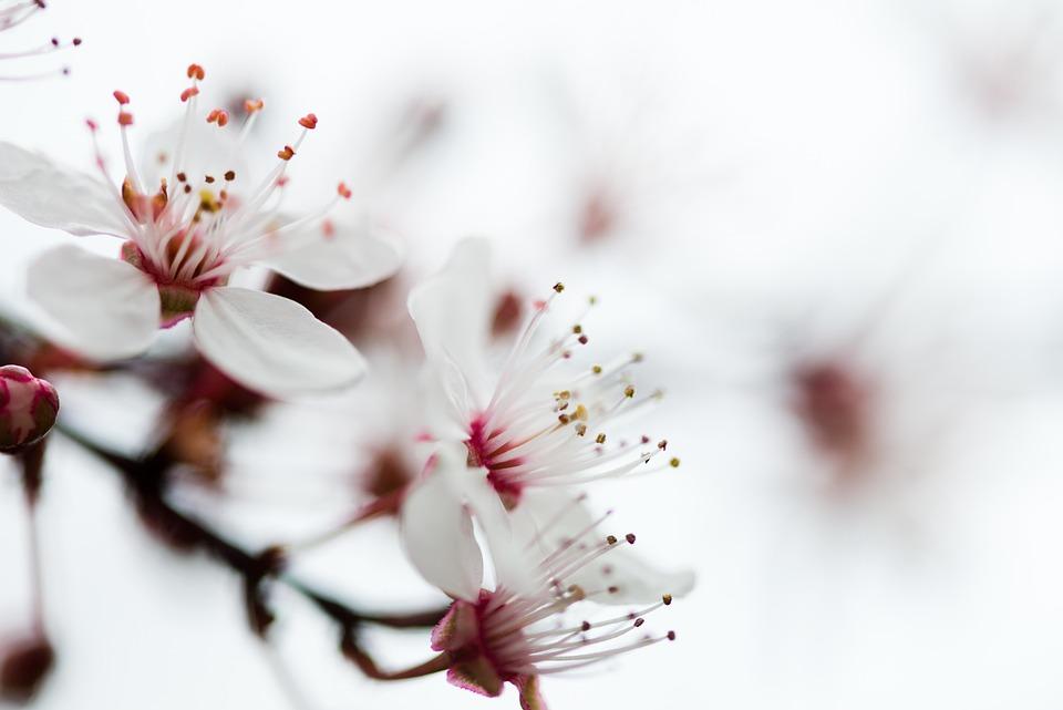 Flower, Blossom, Nature, Spring, Plant, Floral