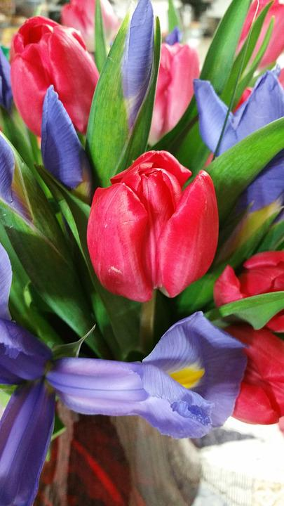 Tulip, Red, Flower, Floral, Bright, Bloom, Petal