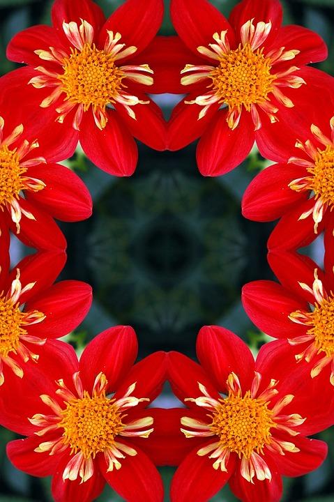 Background, Floral, Flower, Red, Kaleidoscope, Dahlia
