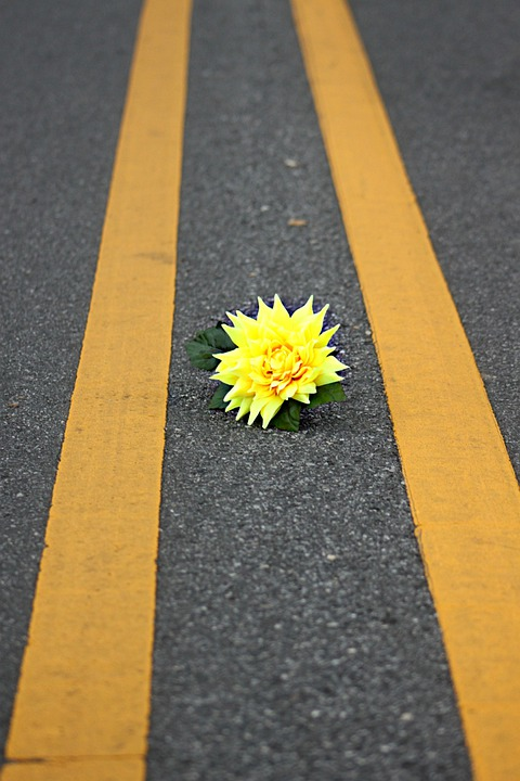 Flower, Yellow, Road, Outside, Outdoor, Floral, Color