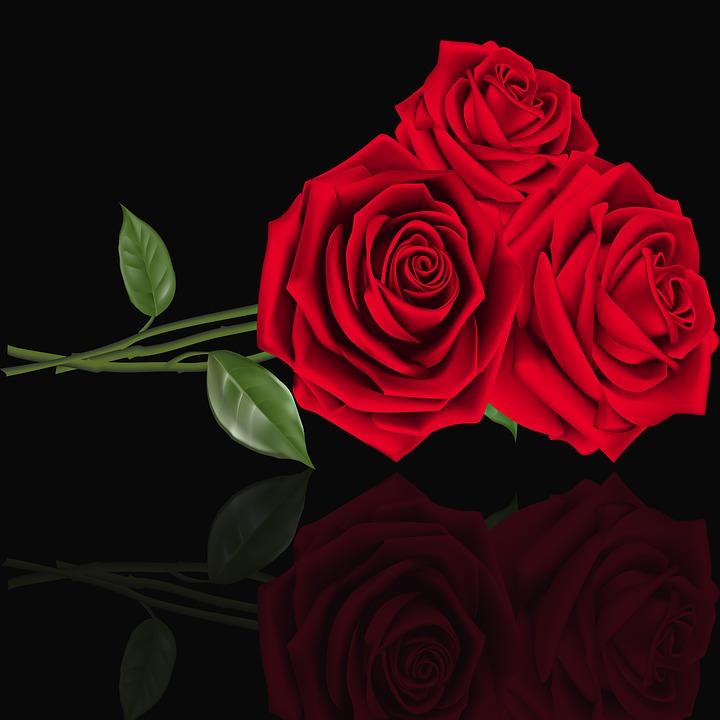 Rosa, Love, Petal, Flower, Floral, Red Roses, Roses