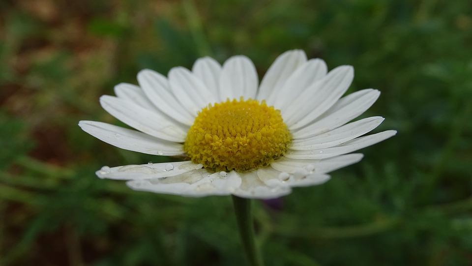 Nature, Flora, Flower, Summer, Floral
