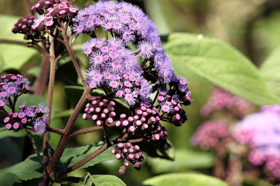 Sydney, Royal, Botanic, Garden, Floral, Plants, Natural