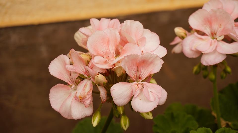 White, Flower, Garden, Nature, Floral, Plant, Blossom