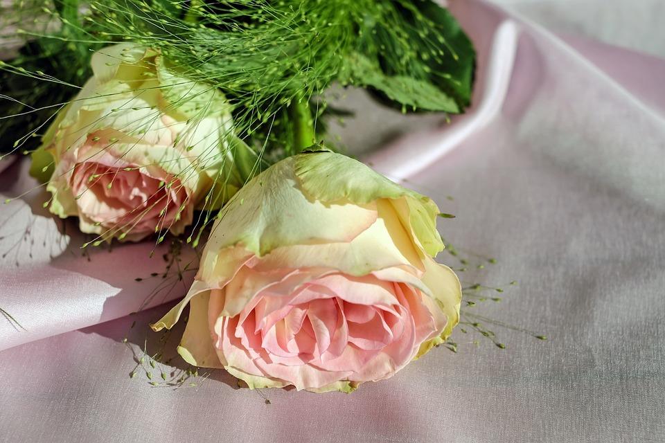Rose, Floribunda, Flower, Blossom, Bloom, Flowers