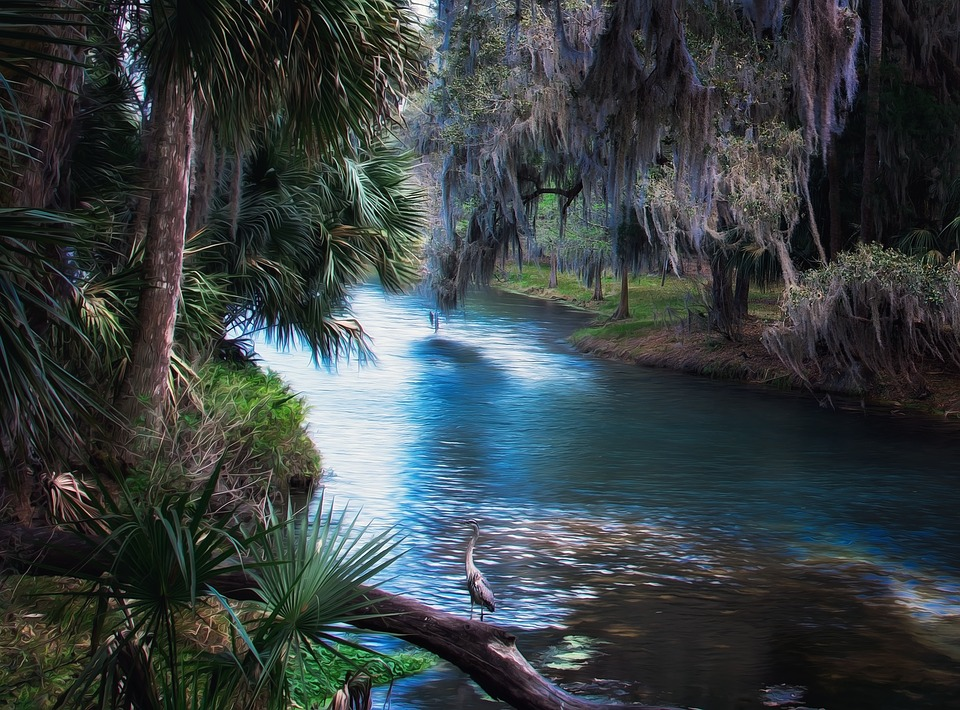 Free Photo Florida Oil Painting River Tropical Palms