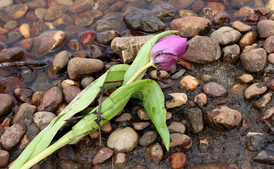 Flotsam And Jetsam, Treibsel, Schwemmsel, Flower, Tulip