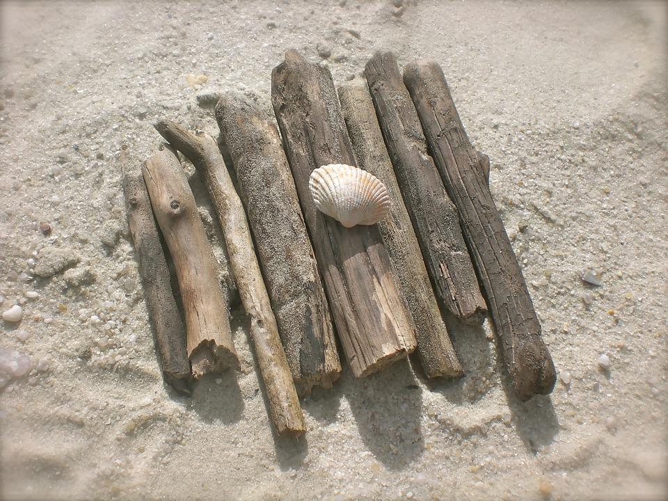 Drift Wood, Flotsam, Mussels, Beach, Baltic Sea