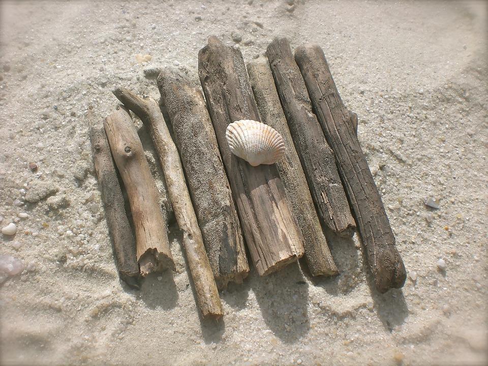 Drift Wood, Flotsam, Mussels, Beach, Baltic Sea