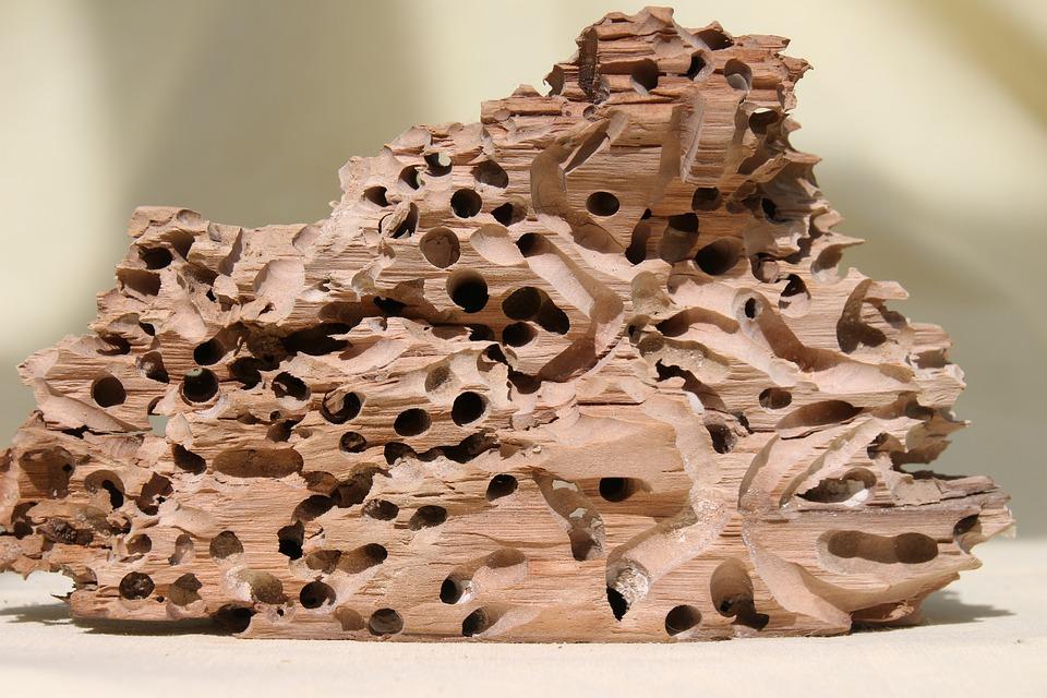 Wood, Schiffsbohrwurm, Flotsam, Drift Wood