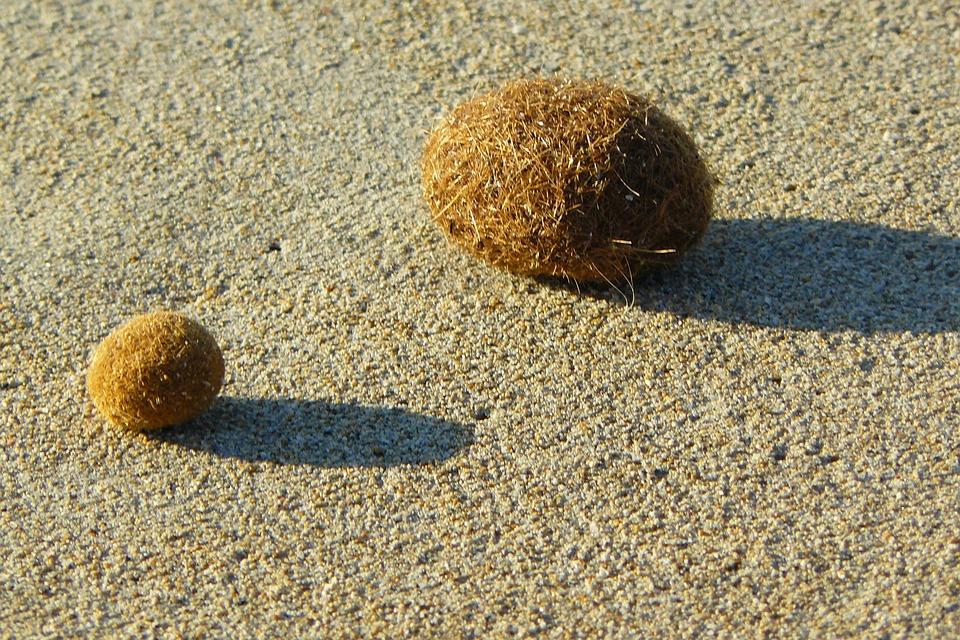Flotsam, Sea Grass, Balls, Sand, Beach, Dry, Sun, Hot