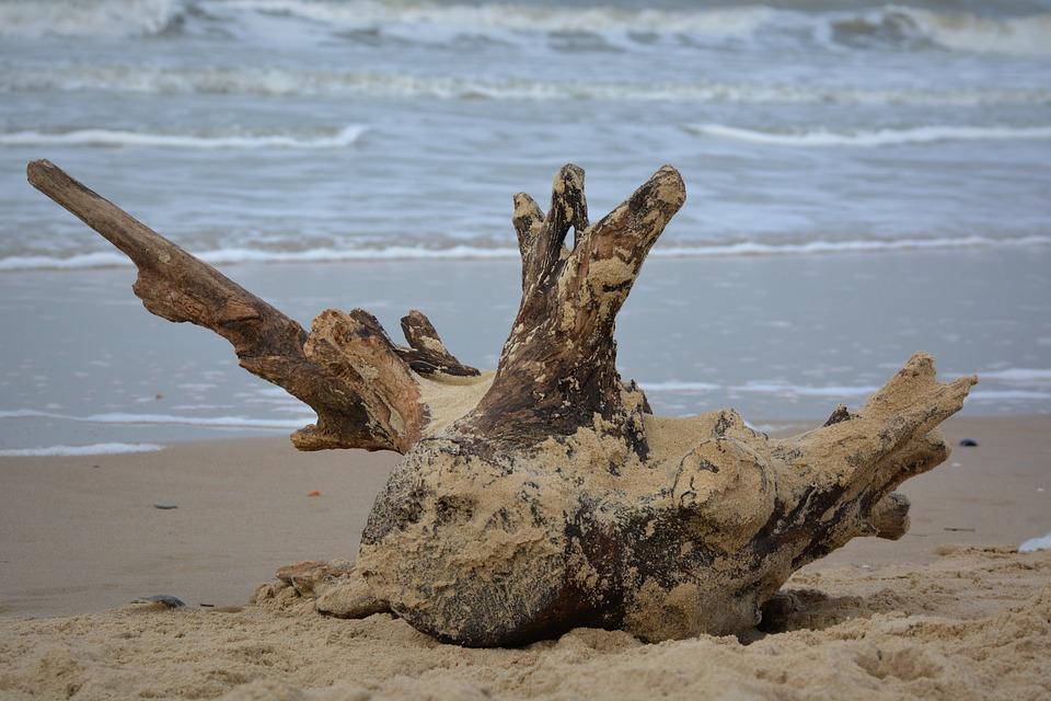 Sea, Beach, Waves, Wood, Nature, Flotsam