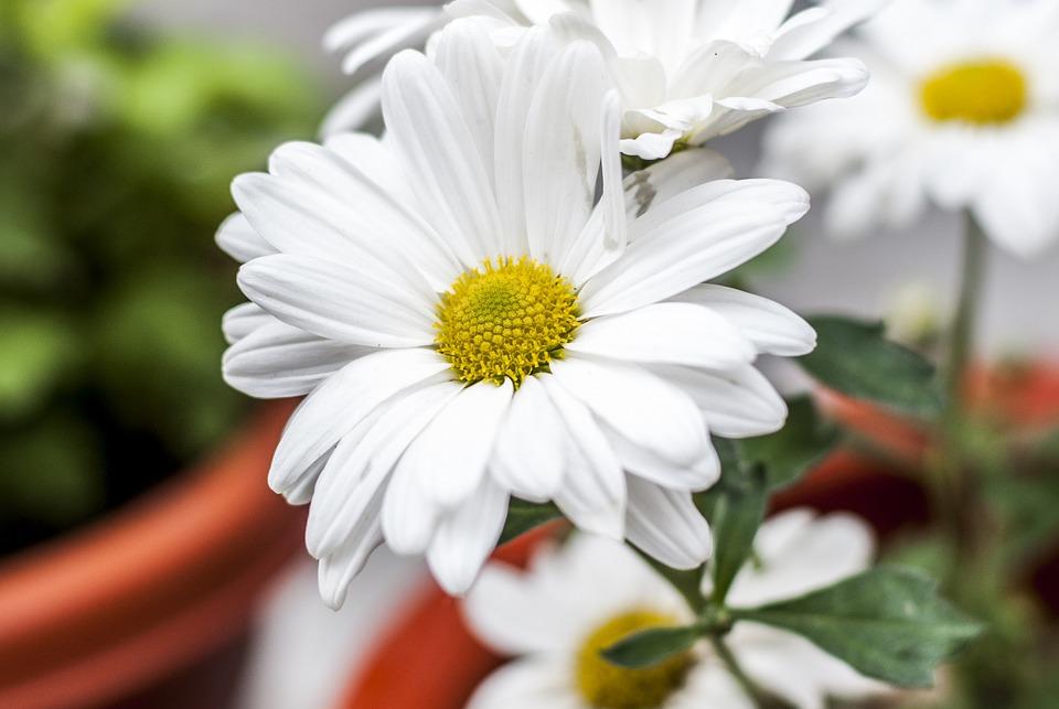 Flower, Beautiful, Nature, Flourishing