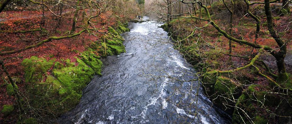 Stream, Forest, Water, Flow, Trees, Cumbria, Nature