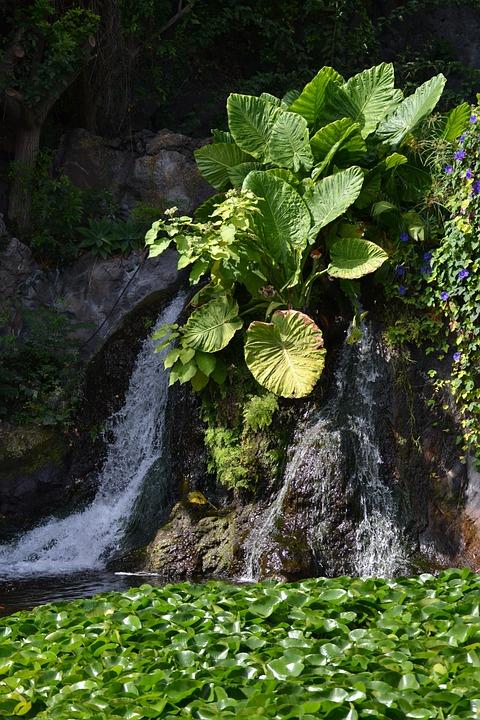 Waterfall, Nature, Landscape, Flow, Jungle